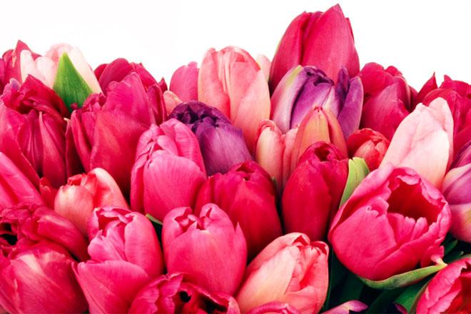 Eddie's Garden Center & Florist