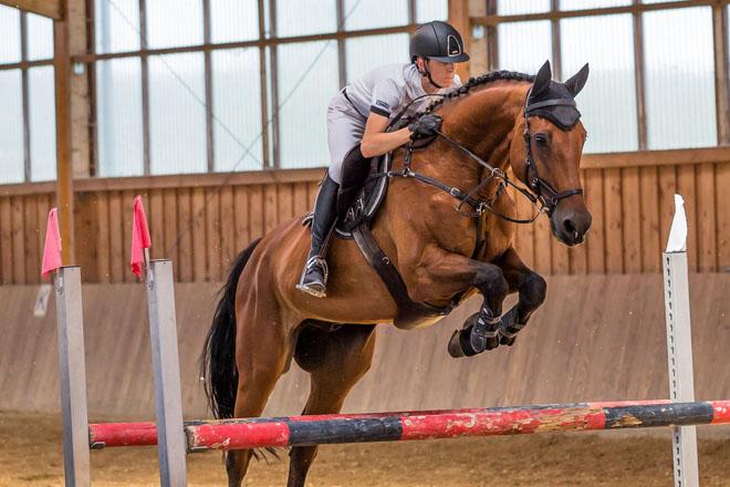 Alabama State 4-H Horse Show