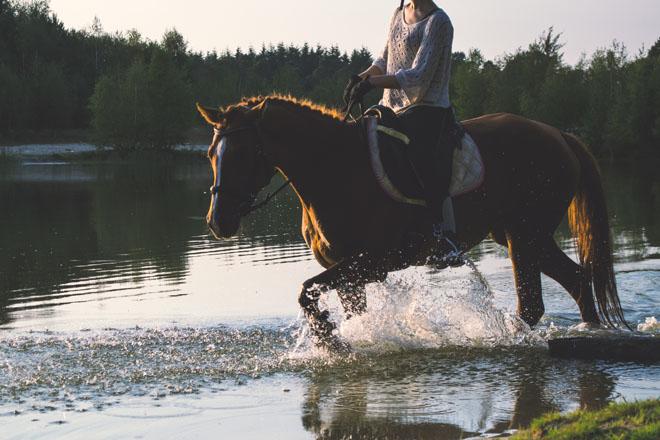 Horseback Riding Visit Lookout Mountain
