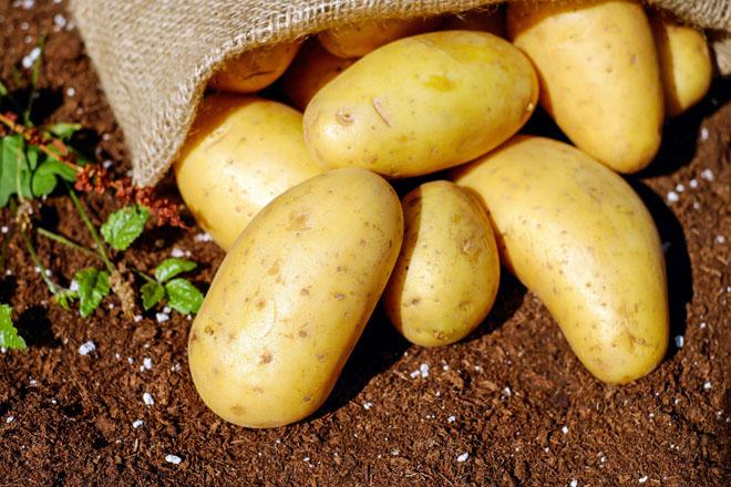 Sand Mountain Potato Festival