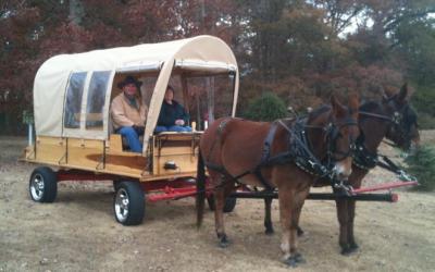 Hillbilly Saddle Club Tack Auction