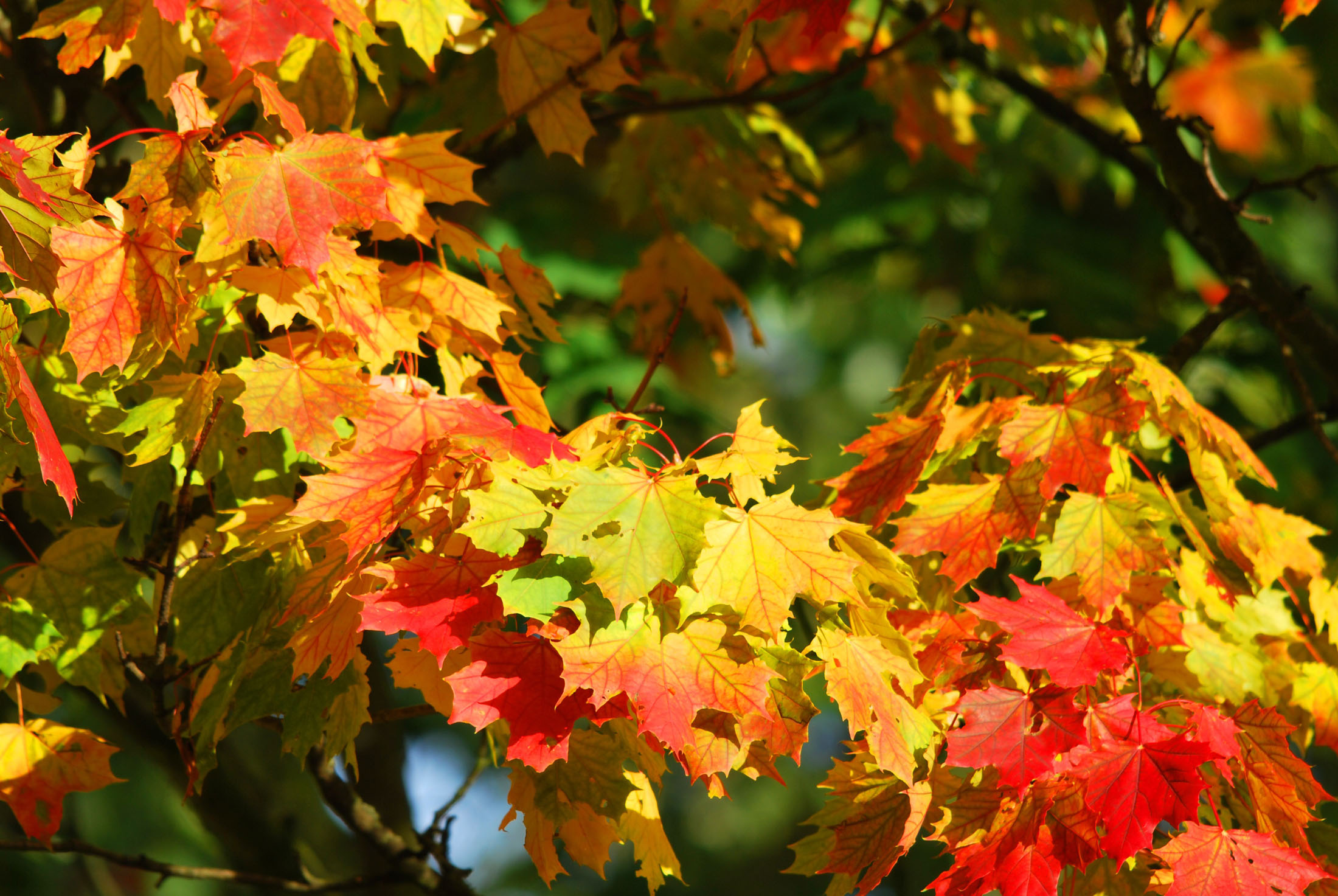 The Magnificent Season of Fall on Lookout Mountain